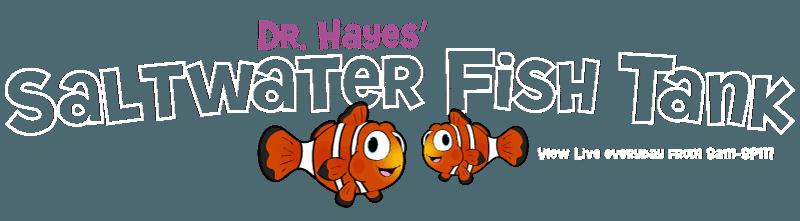 tank Dr Hayes - Dentist - Westerville, Ohio - Columbus, Ohio