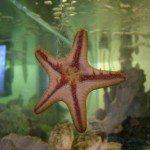 fish tank Dr Hayes - Dentist - Westerville, Ohio - Columbus, Ohio